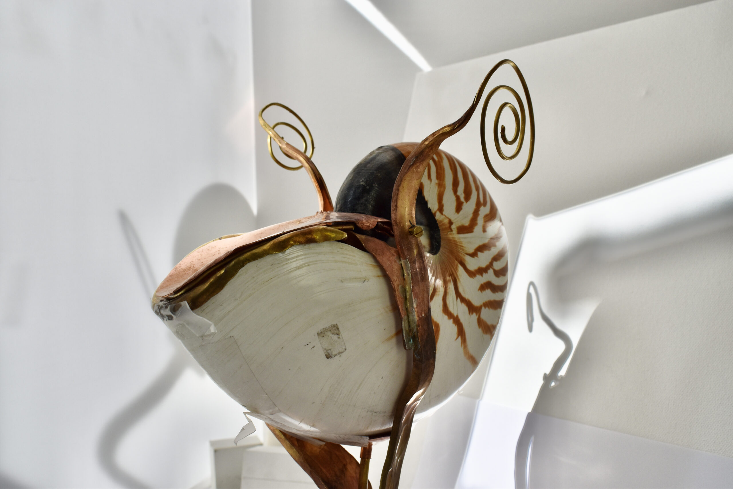 Nautilus beker